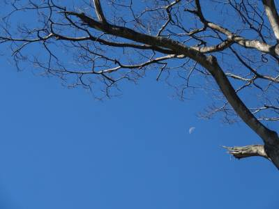 Crescent and the dead tree
