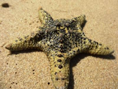 Here's the star of the day - Starfish