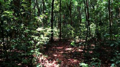 dry zone forest at Chilaw