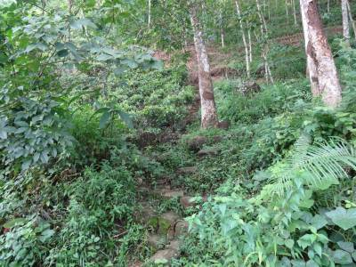 The path uphill through rubber estate, bound to have many leeches