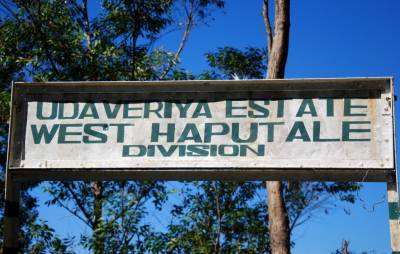 Welcome to West Haputhale
