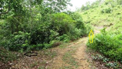 Foot pathway is shown by black arrow. It is the boundary between forest patch and tea estate. If you go further up (yellow arrow), you will come across the hermitage