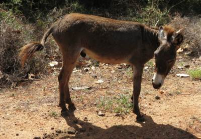 Donkeys are common in this island and they are not used for any work