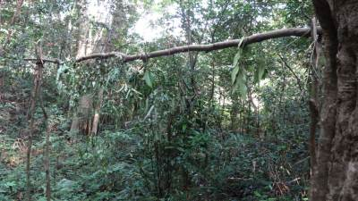 "This is the border of Narangamuwa village and forest. It is called ""Korosgale Muduna"". (කොරොස්ගලේ මුදුන). We also followed rituals before enter the forest"