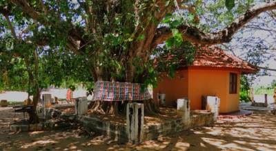 Sacred Bo tree at Manthota ancient temple