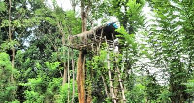 Tree house at Sulugune