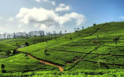 what beautiful tea trail