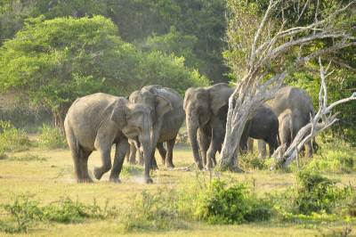 We were lucky to see a herd of elephants on the way to our campsite