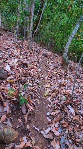 At some places old foot pathway is clear. Recently nobody has gone to top. Therefore foot pathway was not clear