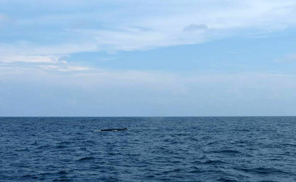 the only Bryde whale we saw
