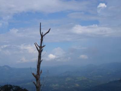 Lonely tree….Towards Kahawatta……