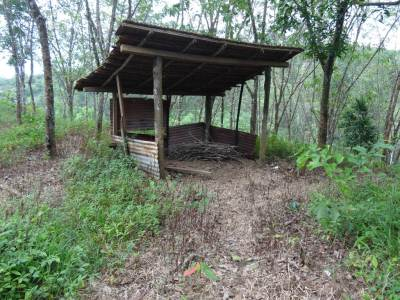 A hut along the path through the rubber plot