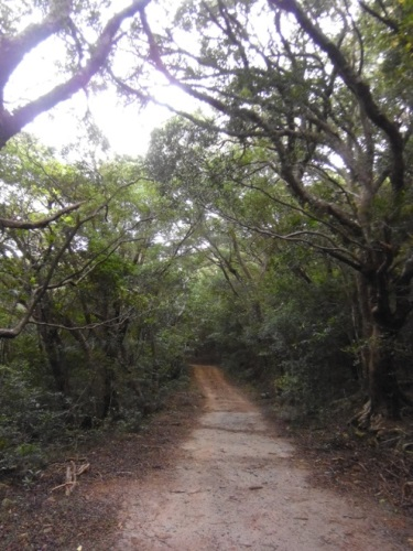 Scenic Path to Pathanegama