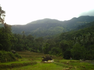 Paddy fields and surrounding mountains