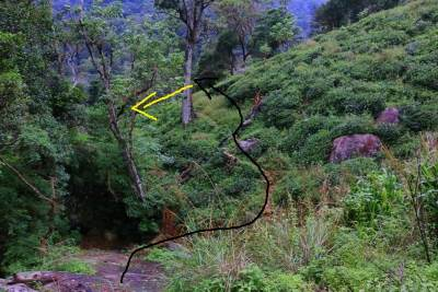 Entering to tea patch and descend in the direction shown by yellow arrow