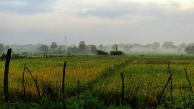misty morning at Kilinochchi