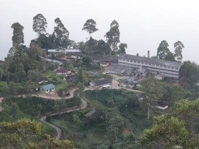Moray Tea Factory, the concrete winding road leads to Peak Field Estate and falls