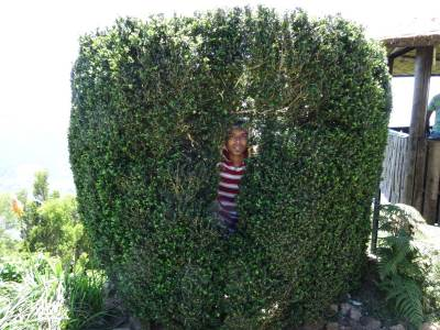 Me, hiding inside the giant bush