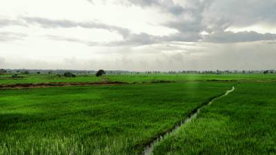 Paddyfields at Samanthure