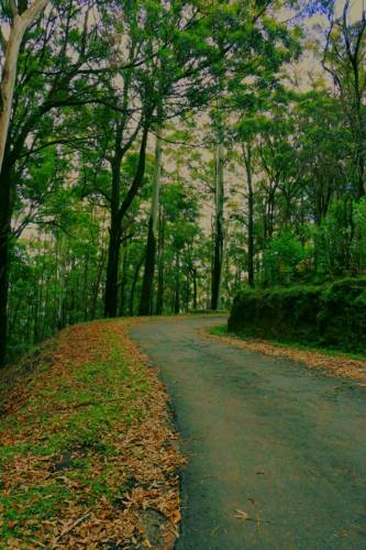 The road from Ohiya to world's end