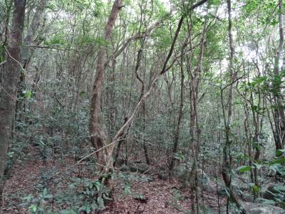 Typical upcountry forest