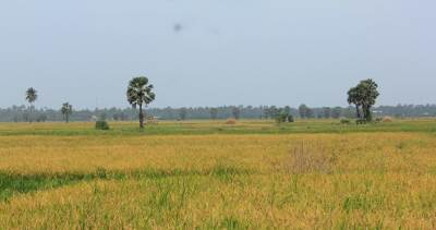 Towards Ponnalai fro Jaffna. Paddy fields up to horizon!