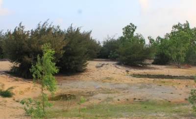 Sand dunes and Cyprus forest