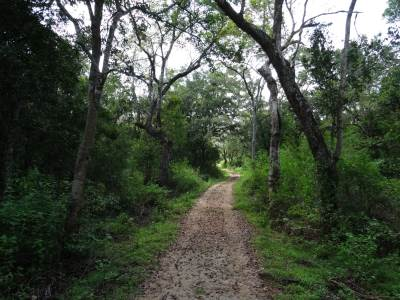 The path to the bungalow, note the thick forest