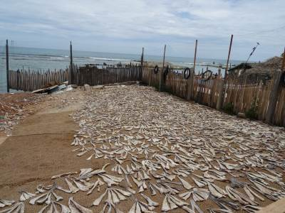 Dried fish area