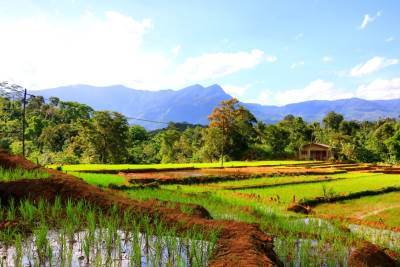 The way on paddy fields...Dethanagala is in back drop.