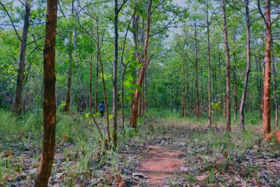 Forest plantation site