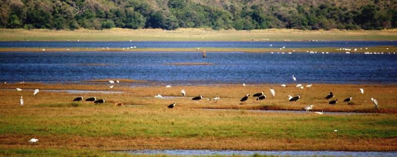 Kaudulla Tank is a good place for bird watching