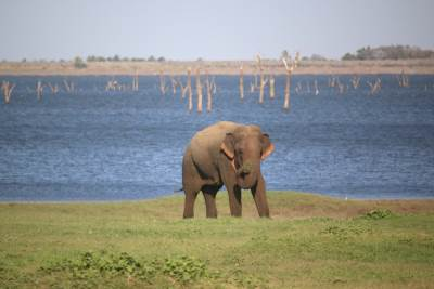 Single elephant found at river bank