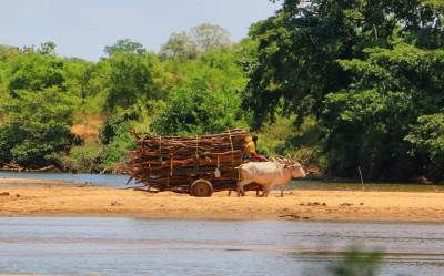 A cart crossing Amban Ganga from Wasgamuwa NP.