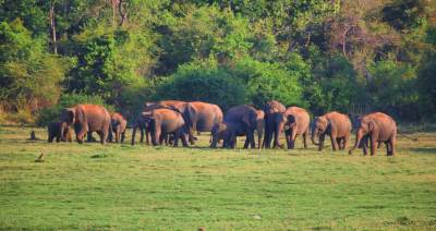 Another set of elephants gathered beyond the great canal