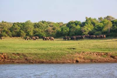 Elephant gathering beyond the giant canal