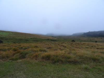 Never ending grasslands invaded by the mist